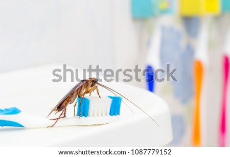 Cockroaches are on the toothbrush in the bathroom, and cockroaches also carry the germs to humans in the home should be equipped with a cockroach protection system.