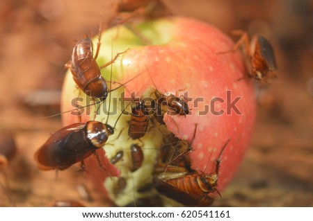 Cockroaches Eating an Apple #620541161