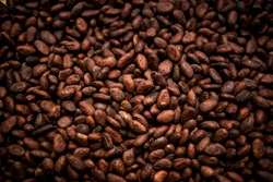 Cocoa beans and cocoa fruit on the cocoa concept with raw materials Aromatic cocoa beans as background