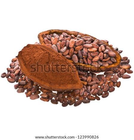 cocoa beans and cocoa powder into cocoa fruit isolated on white background