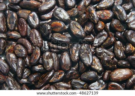Cocoa beans closeup