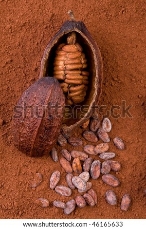 cocoa fruit and powder