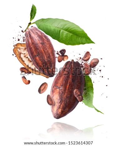 Cocoa pod flying in the air. Cracked and whole cocoa pod and beans levitate on white background. High resolution image. Levitation concept.
