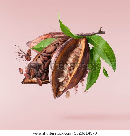 Cocoa pod flying in the air. Cracked and whole cocoa pod and beans levitate pink background. High resolution image. Levitation concept.