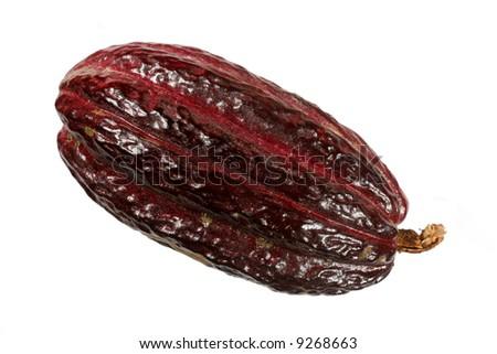 Cocoa pod Theobroma cacao