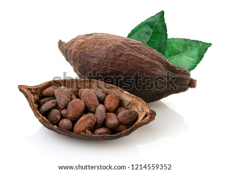 Cocoa pods and cocoa beans and cacao powder and cacao fruit with green leaves isolated on white background.