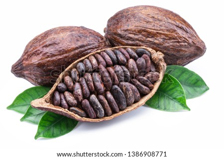 Cocoa pods and cocoa beans - chocolate basis isolated on a white background. #1386908771