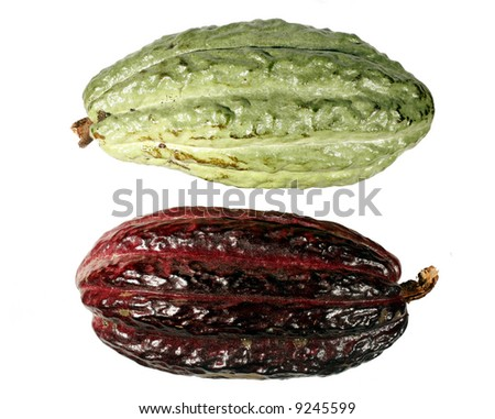 Cocoa pods isolated on white