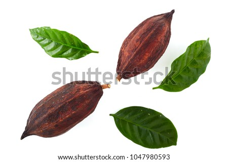 Cocoa pods with Cocoa leaf on a white background #1047980593