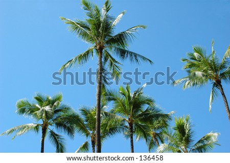 Coconut and palm