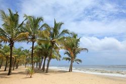 Coconut groove in the sandy beach of Mararikulam, Kerala