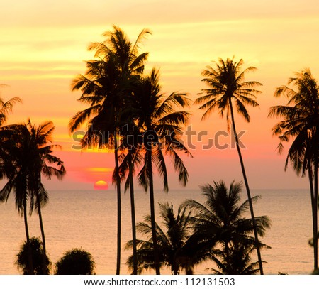 Coconut Horizon Evening Scene