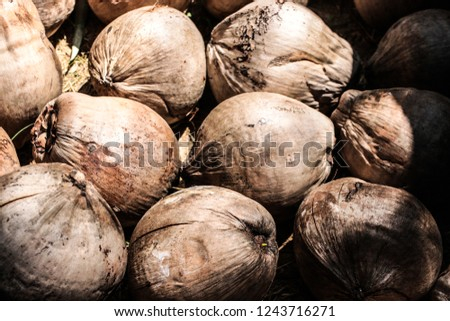 Coconut is considered a tree of life (Tree of Life) because it can produce both coconut water. Coconut fiber, food, fuel, household appliances, musical instruments and much more.