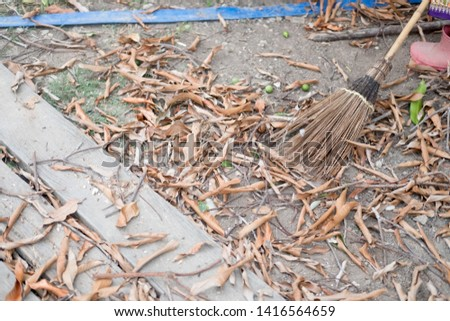 Coconut leaf broom  of which is cleaned dry foliage