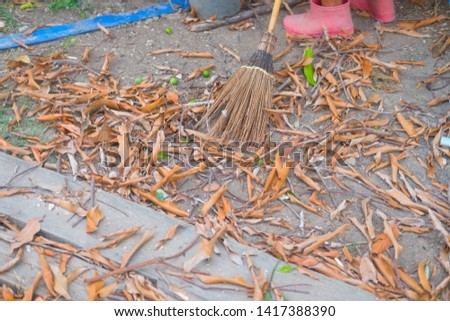 Coconut leaf broom  of which is cleaned dry foliage #1417388390