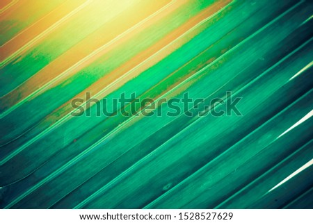 Coconut leaf, palm leaf, coconut leaf background with sunlight