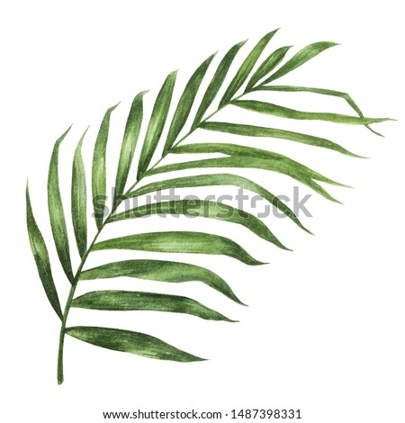 Coconut leaf watercolor isolated on white background.