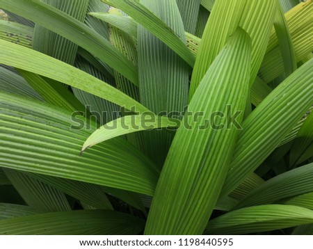 coconut leaves,Green leaf texture,Textured background. #1198440595