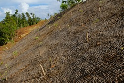 Coconut mats are used to maintain soil fertility, stop soil erosion
