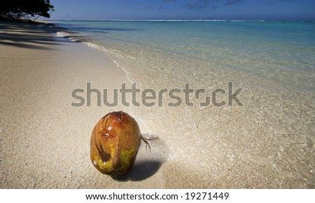 Coconut on deserted white sand beach in Rarotonga, Cook Islands