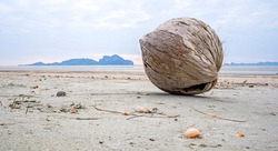 Coconut on the beach with old broken shells. Coconut outdoor background. clean beach
