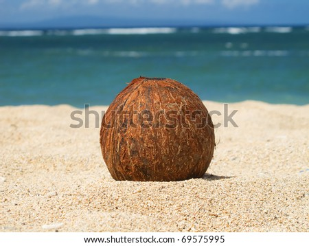 Coconut on the sand of the beach