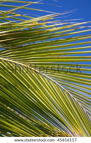 coconut palm beach - stock photo