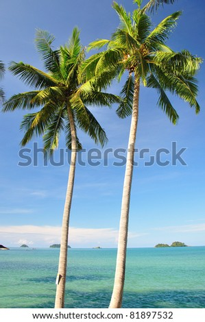Coconut Palm, Chang Island, Thailand