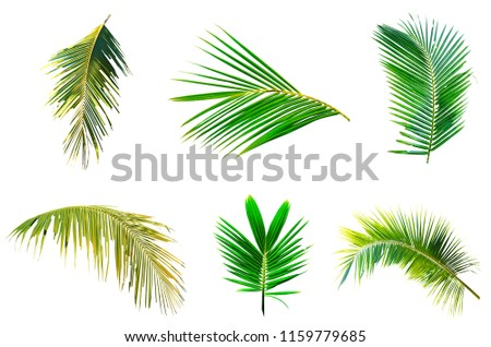 coconut palm leave leave set collection on white background