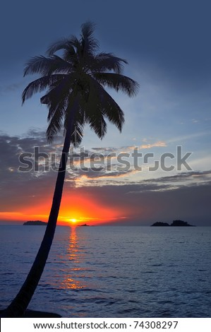 Coconut palm on sand beach in tropic on sunset. Thailand - stock photo
