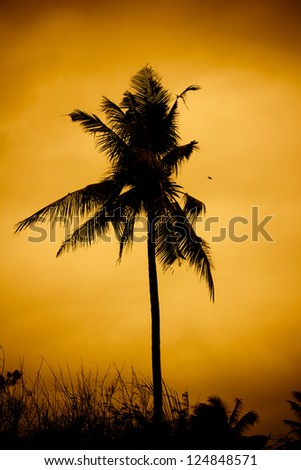 Coconut palm on sunset.