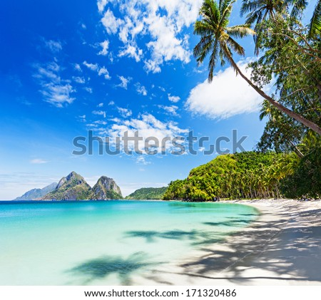 Coconut palm on the beauty beach with turquoise water