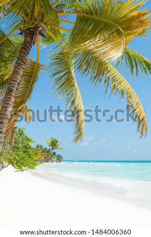 Coconut palm tree and azure Caribbean sea at paradise Saona island, Dominican Republic
