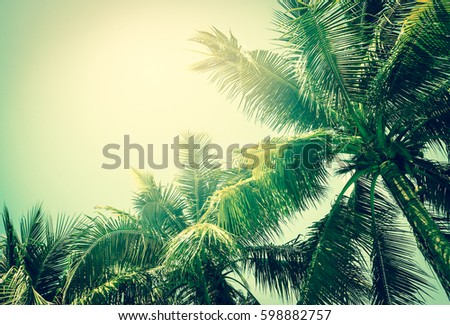coconut palm tree in vintage style - Shutterstock ID 598882757