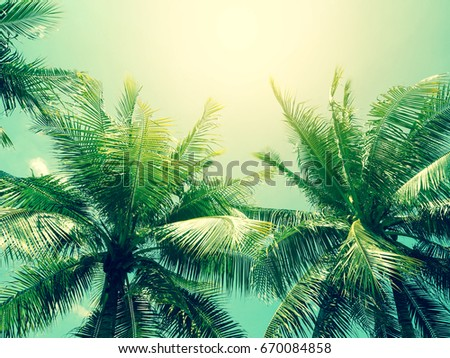 coconut palm tree in vintage style - Shutterstock ID 670084858