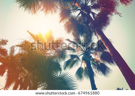 coconut palm tree on beach and...
