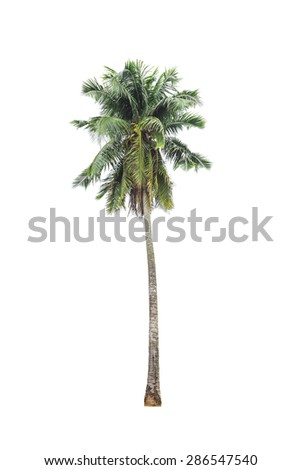 coconut palm tree on isolated - Shutterstock ID 286547540
