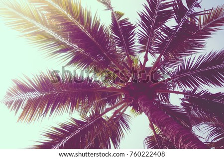 Coconut palm tree on sky - Vintage Filter