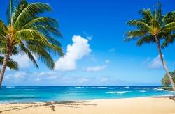 Coconut Palm tree on the sandy beach in Hawaii, Kauai