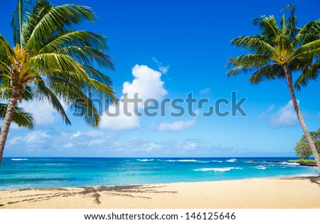 coconut palm tree on the sandy...