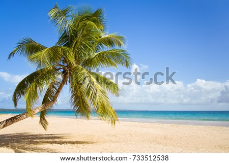 Coconut palm tree on the sandy beach of Sainte Marie island, Madagascar #733512538