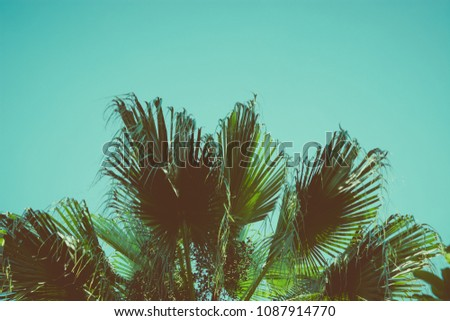 Coconut palm tree under blue sky. Vintage background. Travel card. Vintage effect.