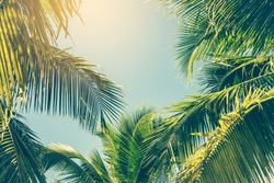 Coconut Palm tree with blue sky,retro and vintage tone.