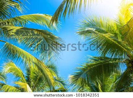 Coconut Palm tree with blue sky,retro and vintage tone. #1018342351