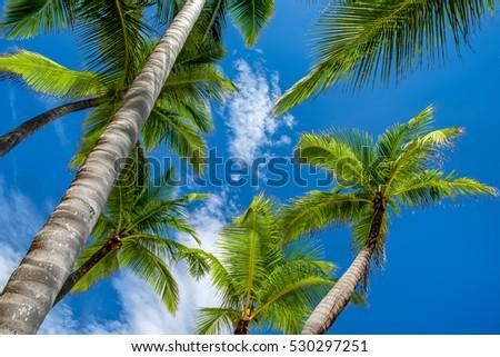 Coconut Palm trees against a blue tropical sky #530297251