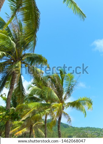 Coconut palm trees against blue  sky #1462068047