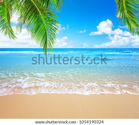 Coconut palm trees against blue sky and beautiful beach in Punta Cana, Dominican Republic. Vacation holidays background wallpaper. View of nice tropical beach. #1054190324