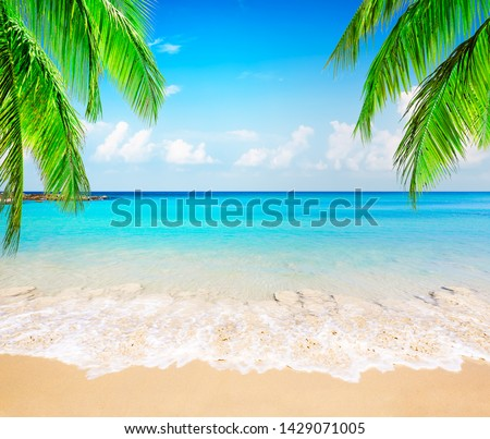Coconut palm trees against blue sky and beautiful beach in Punta Cana, Dominican Republic. Vacation holidays background wallpaper. View of nice tropical beach. #1429071005