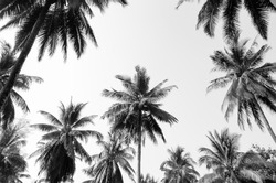 Coconut palm trees against  sky