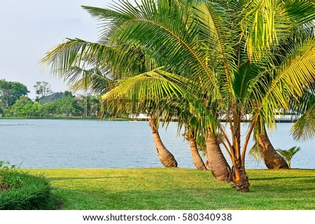 Coconut palm trees along the lake in public park- natural landscape #580340938
